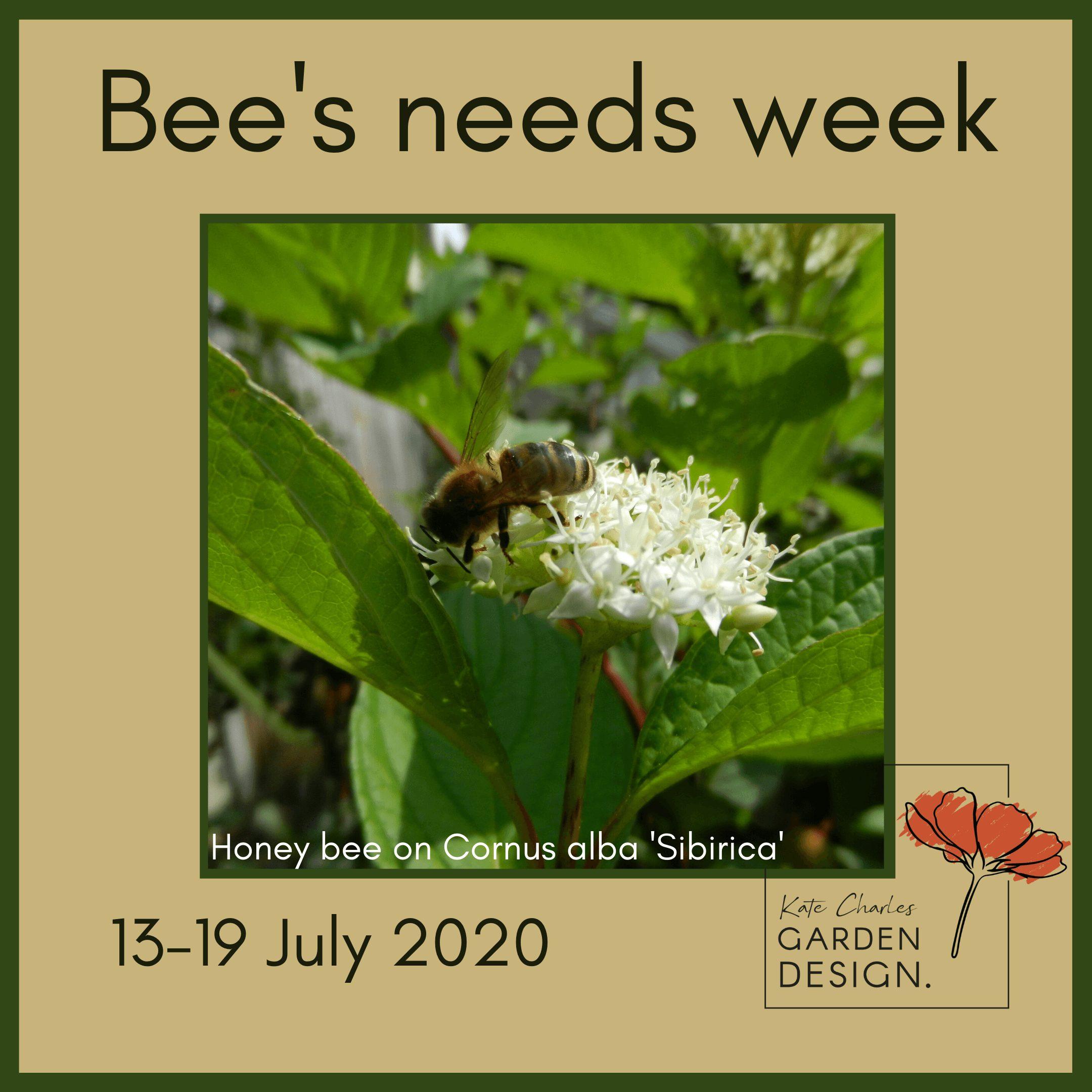 Bee's Needs week